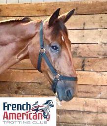 FrenchAmericanTrottingClub 1/09/18