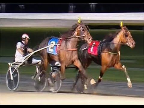 Hudson Filly Trot 2018 (Yonkers) : Plunge Blue Chip