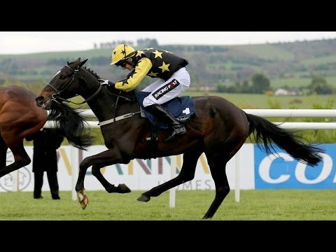 Champion Novice Hurdle 2017 - Punchestown - Bacardys